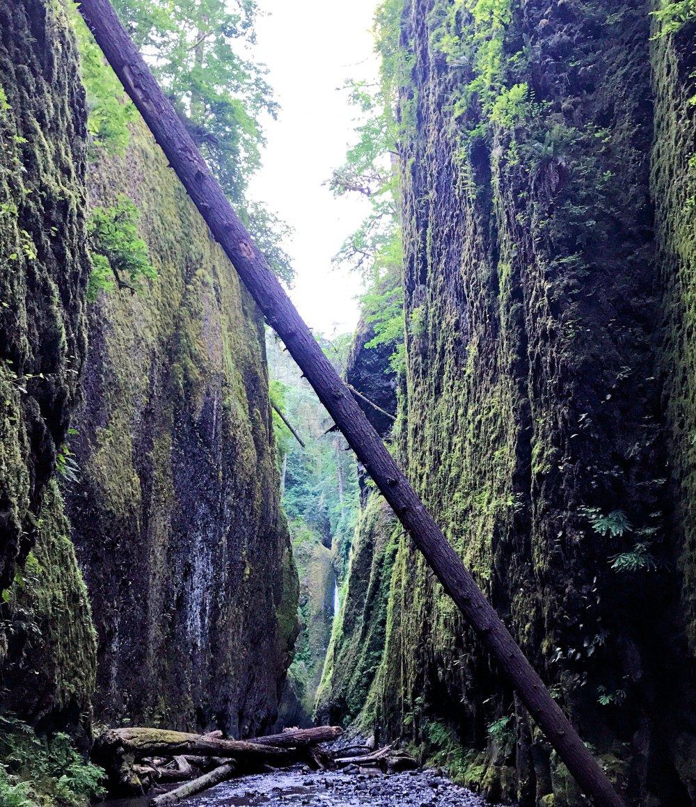 Oneonta-Gorge-Trek